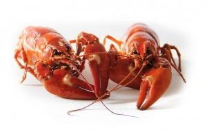 sweden crayfish